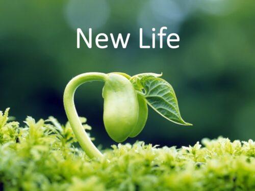 La nuova vita in Cristo: a.k.a. la santificazione